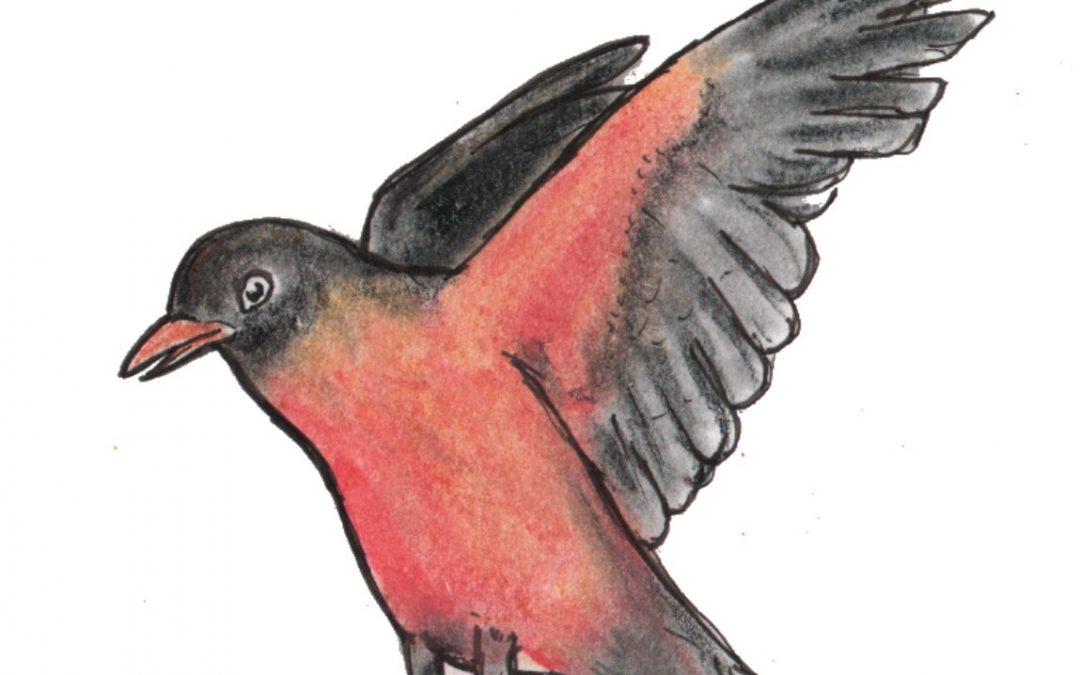 Robin Flying off Rail